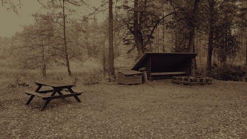 Безкоштовне стокове фото на тему «Природа, самотній»