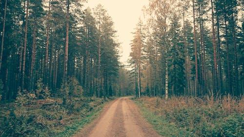 Fotos de stock gratuitas de arboles, bosque, camino de tierra, camino polvoriento