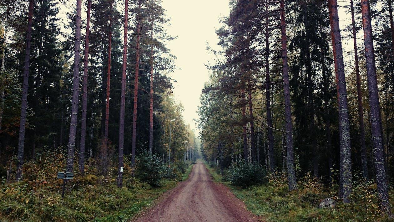 Безкоштовне стокове фото на тему «Вулиця, дерева, Природа»
