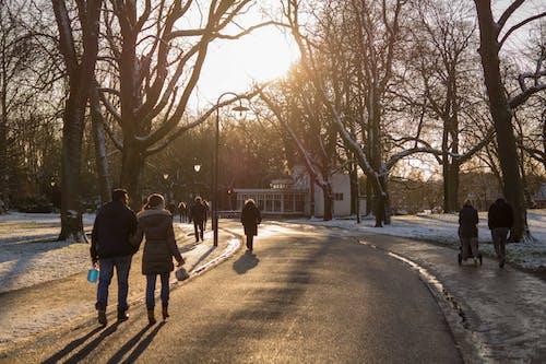 人, 冬季, 樹木, 街 的 免費圖庫相片