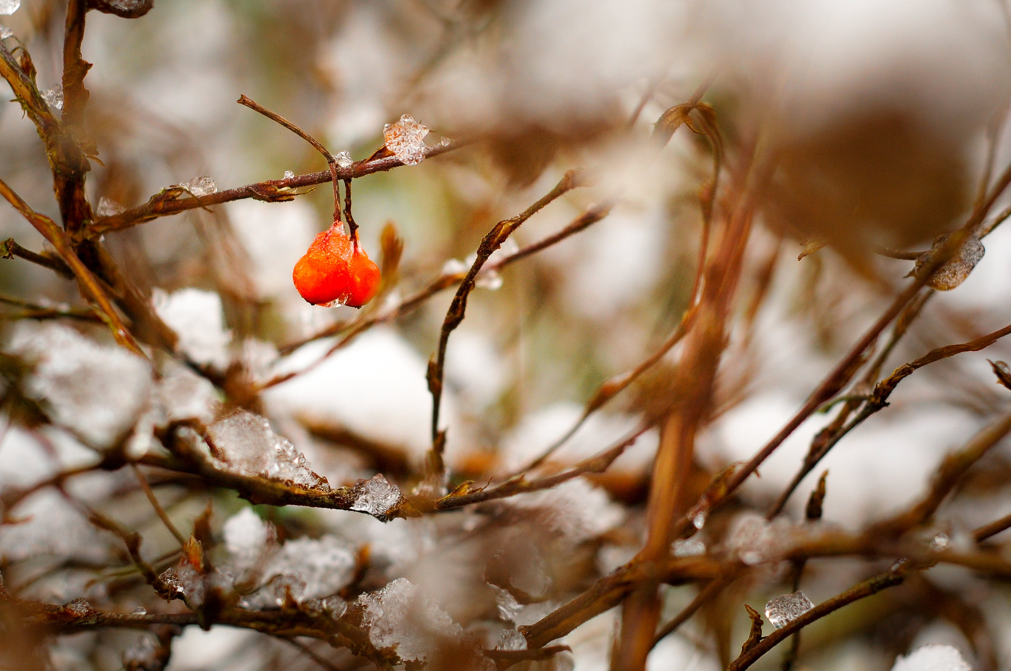 Free stock photo of snow, nature, bush, winter