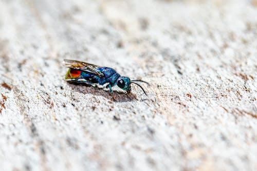 Δωρεάν στοκ φωτογραφιών με aan lichtbak toevoegen, aan lichtbak toevoegen 에스메랄다 스, beetle, άγρια φύση