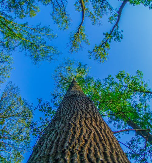 Základová fotografie zdarma na téma 7 工匠 鱼 眼, obloha, strom
