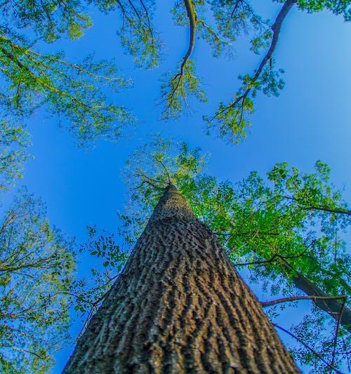 Fotos de stock gratuitas de 7artisansfisheye, árbol, cielo