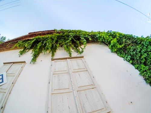 Free stock photo of 7artisansfisheye, facade, green