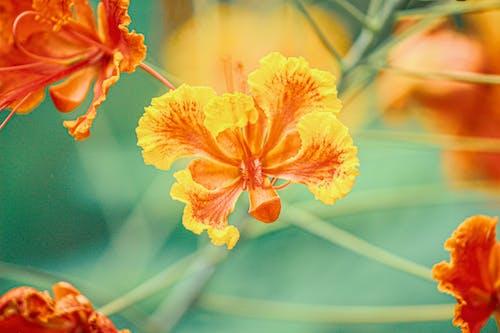 Yellow and Red Flower in Tilt Shift Lens