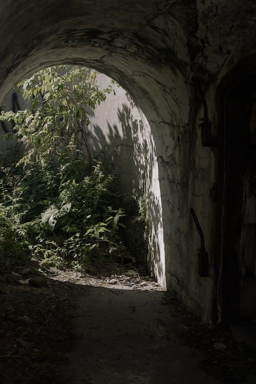 Immagine gratuita di abbandonato, albero, antica architettura romana, architettura