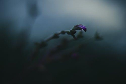 Blooming violet flower bud on stem in darkness