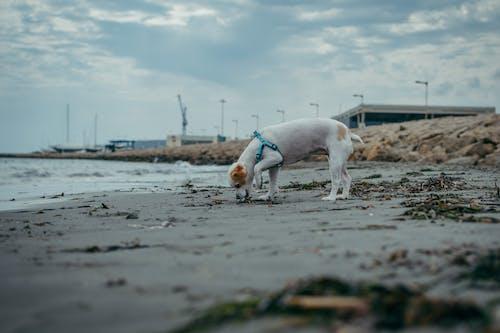 冬季, 動物, 可愛的小狗 的 免費圖庫相片