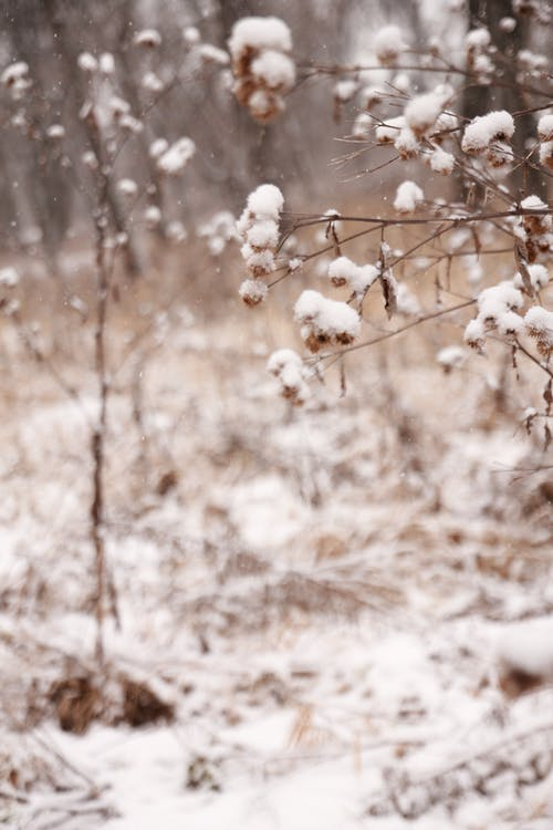 Free stock photo of baby it s cold outside, canada, cold
