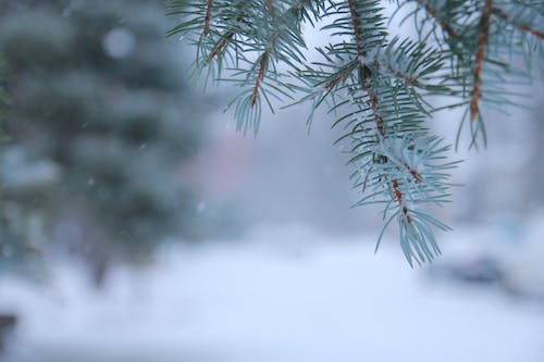Free stock photo of baby it s cold outside, canada, christmas