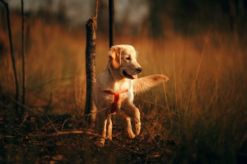 Playful dog in countryside field in twilight