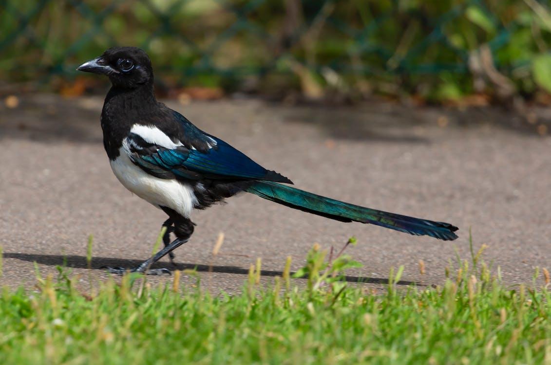 Black and White Bird on Ground