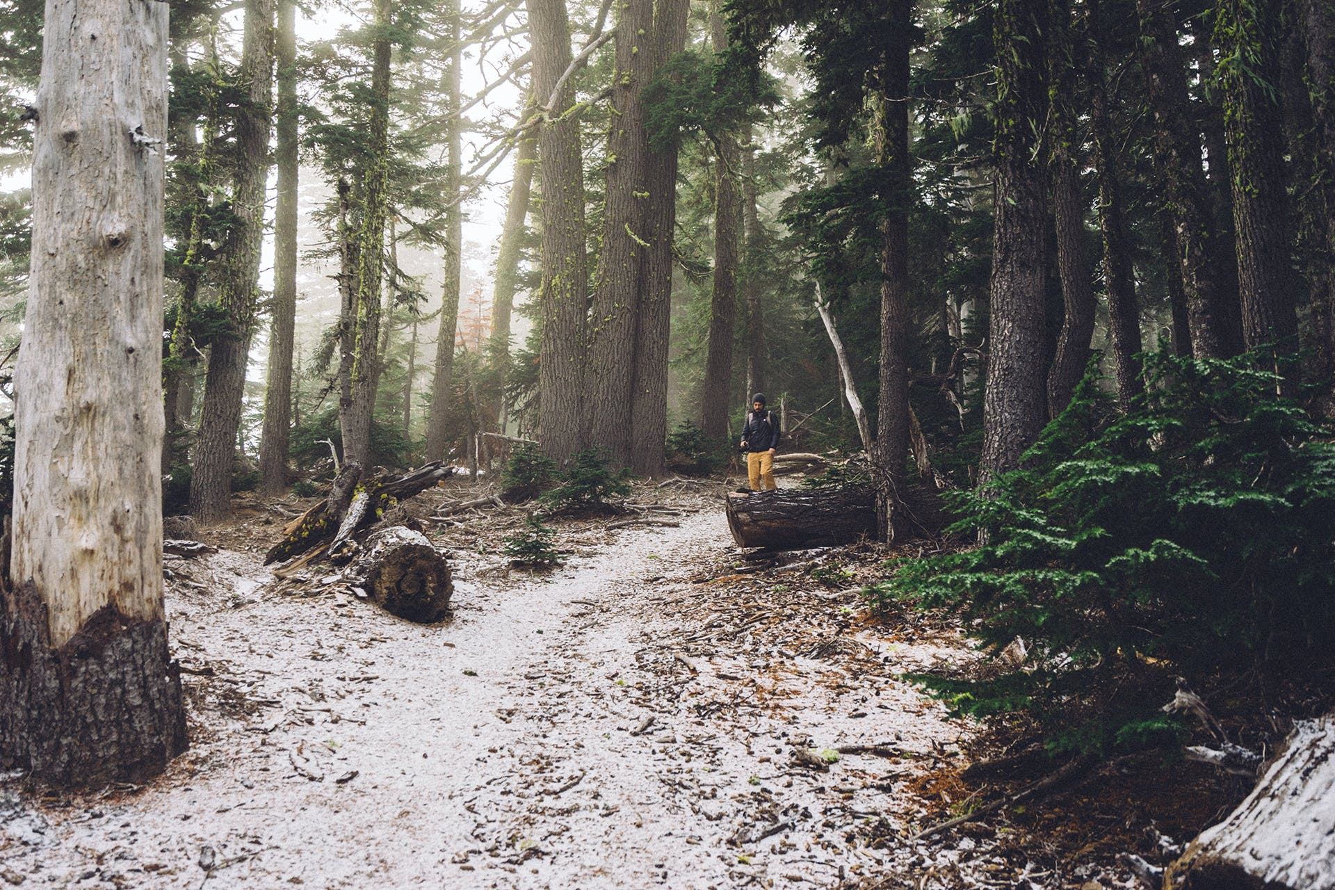 Free stock photo of forest, trees, hiker, hiking