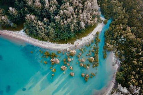 Immagine gratuita di acqua, aereo, albero, altezza