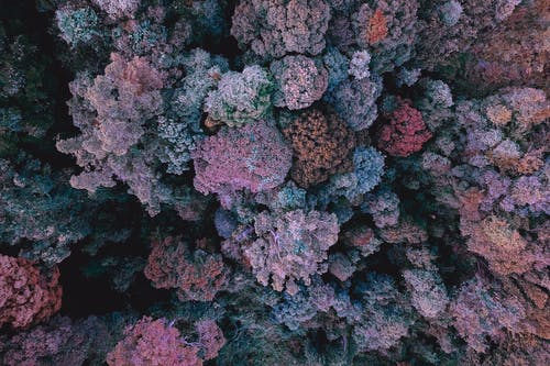 Colorful corals growing in water
