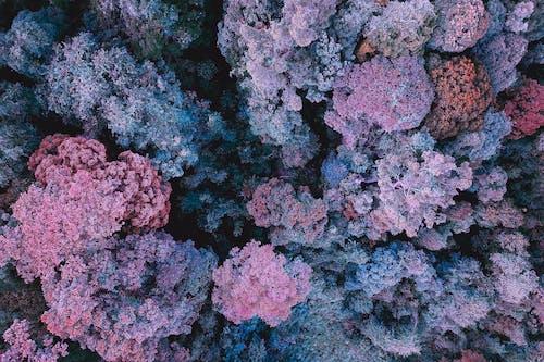 Scenic purple reefs on sea bottom