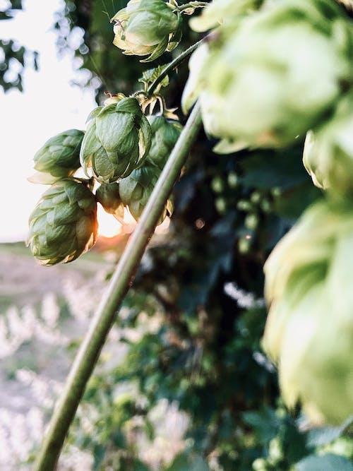 Green Flower Bud in Tilt Shift Lens