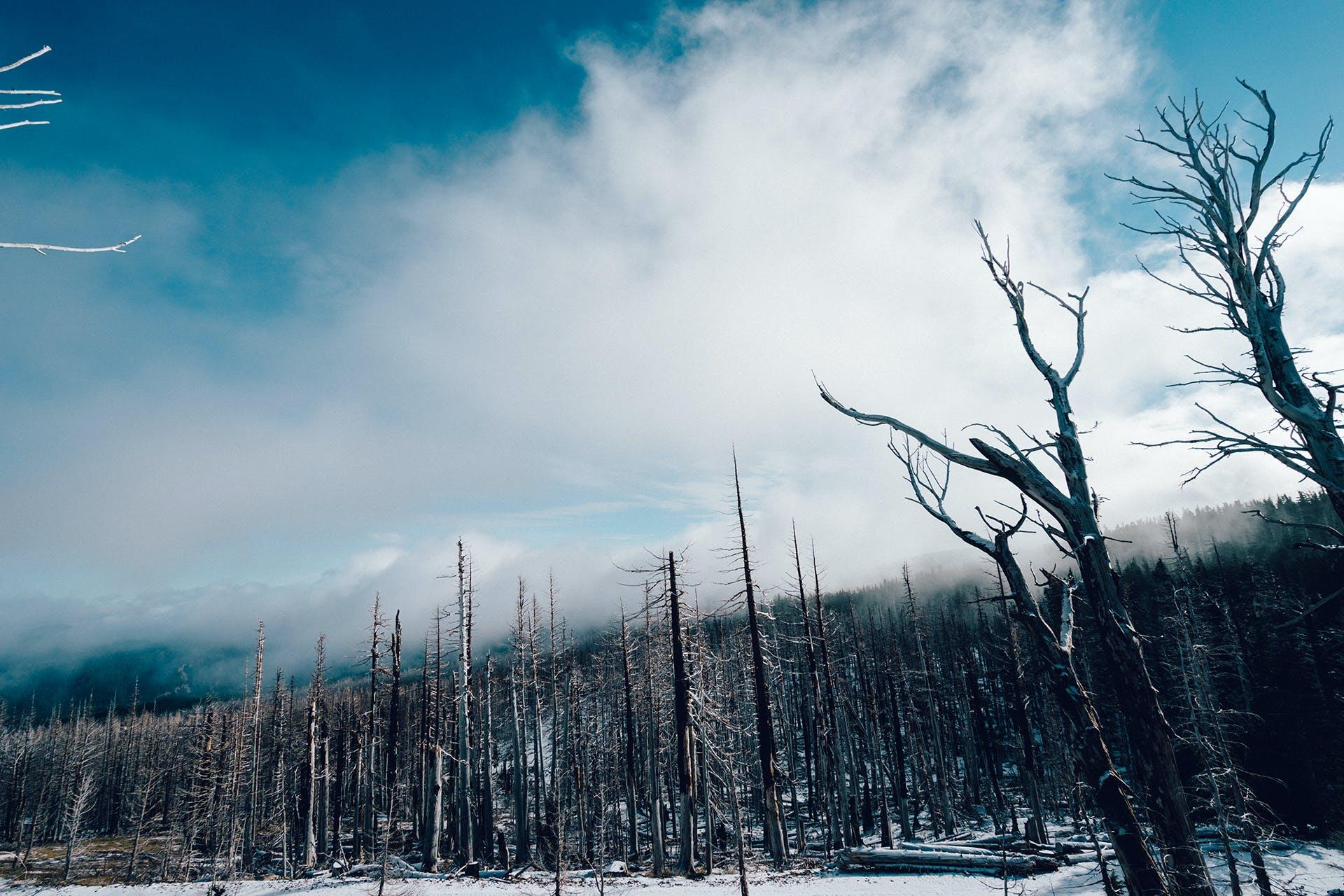hutan, musim dingin, pohon