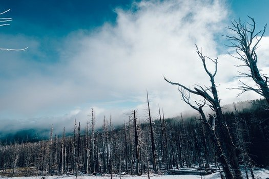 Free stock photo of snow, forest, trees, winter