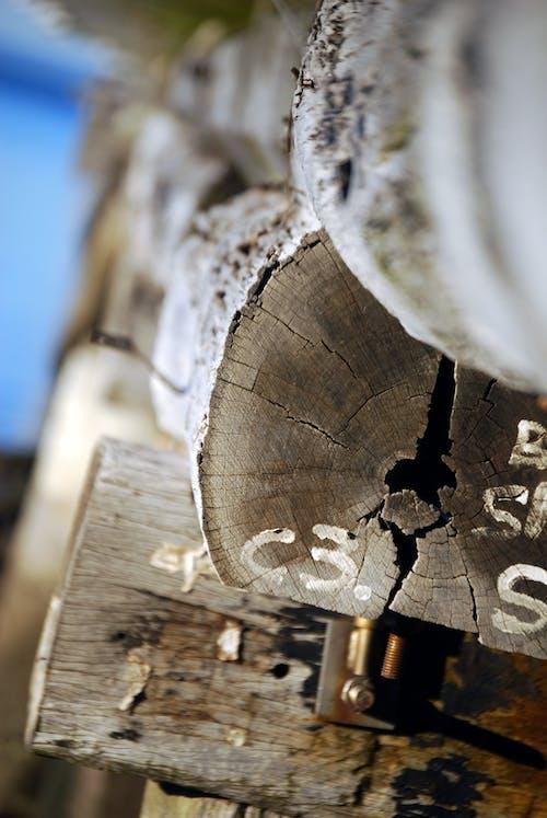Ingyenes stockfotó fából készült, fahasábok, fakitermelés, halom témában