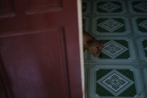 Free stock photo of animal, chill, dog, sad