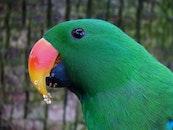 bird, pet, colorful