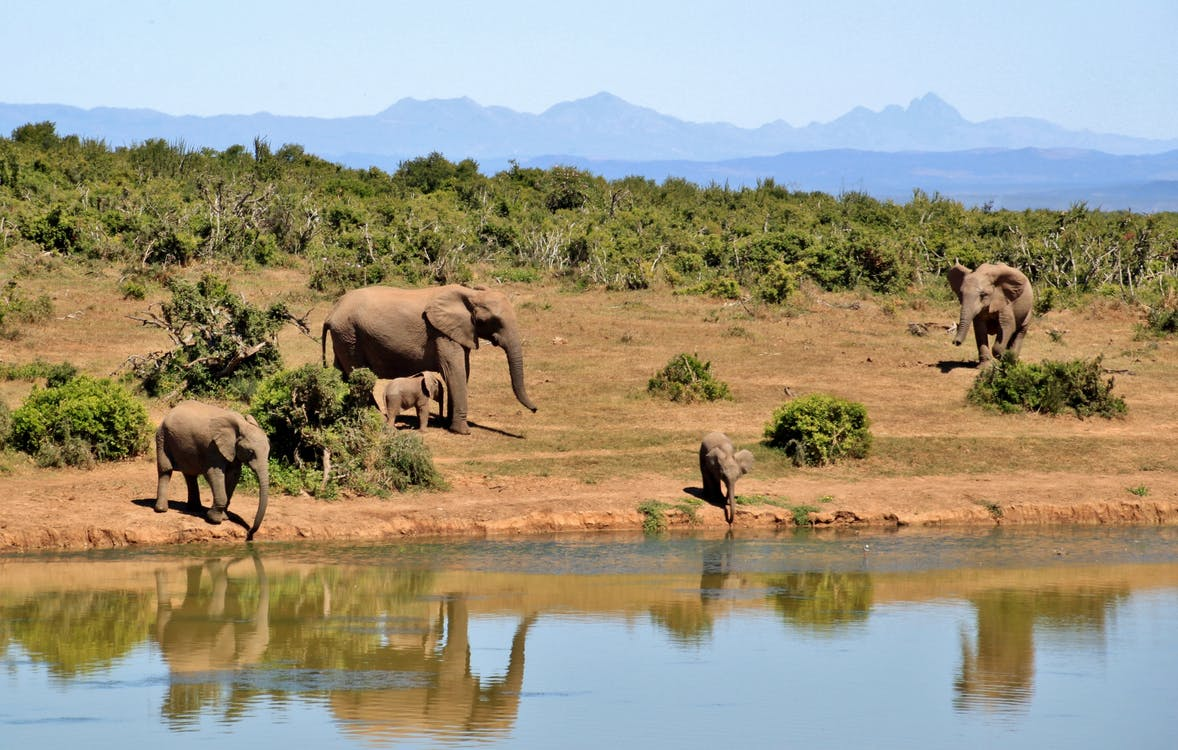 Gray Elephants Near Body of Water during Daytime