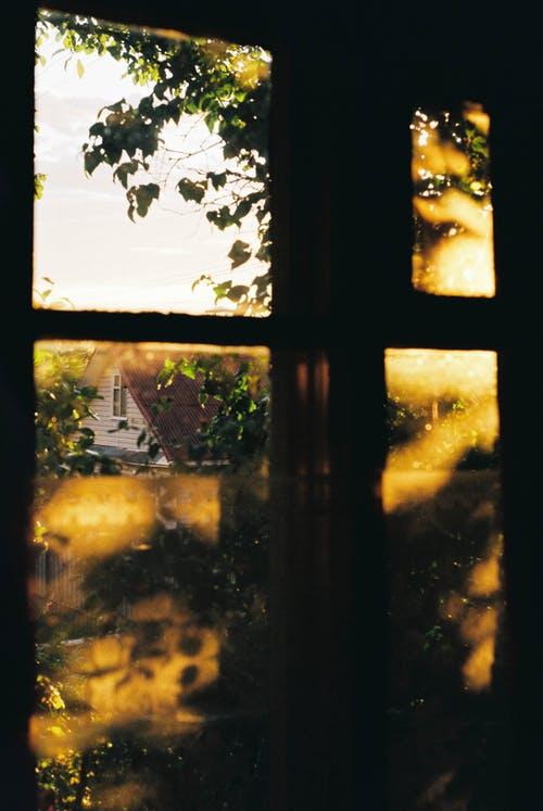 Kostnadsfri bild av abstrakt, blad, by, falla