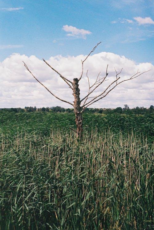 Kostnadsfri bild av åkermark, blå, blad, bondgård