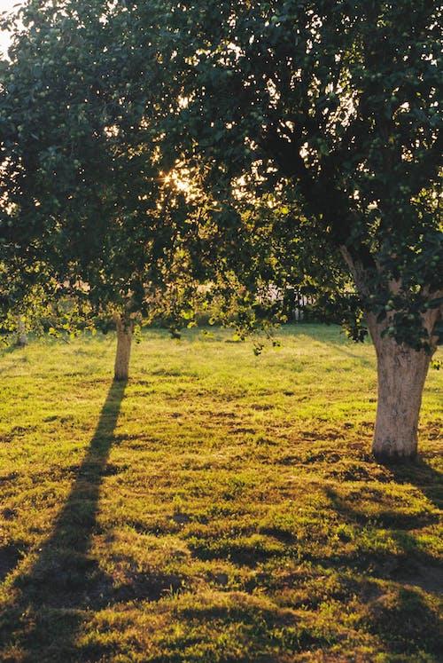 Kostnadsfri bild av äpplen, blad, by, falla