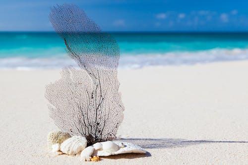 Foto profissional grátis de água, areia, beira-mar, concha do mar