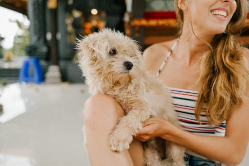 Crop anonymous female owner caressing purebred cute dog Toy Poodle while smiling brightly