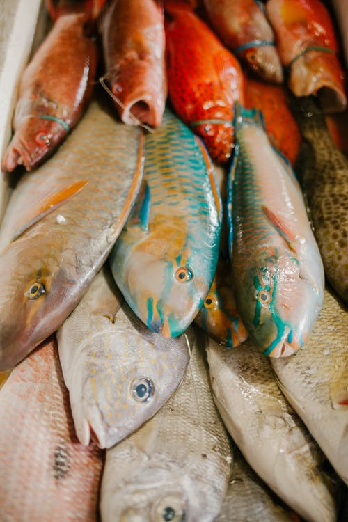 Assorted fish in market of seafood