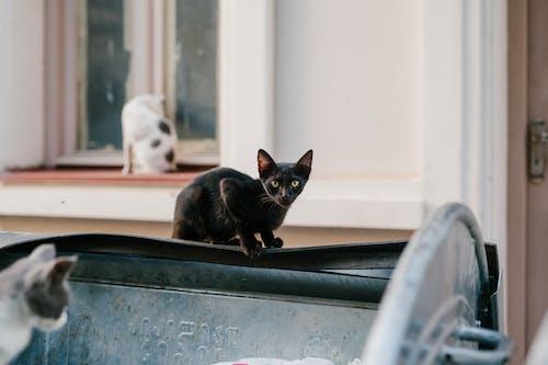 Chats Errants Assis Sur La Rue Près De La Maison