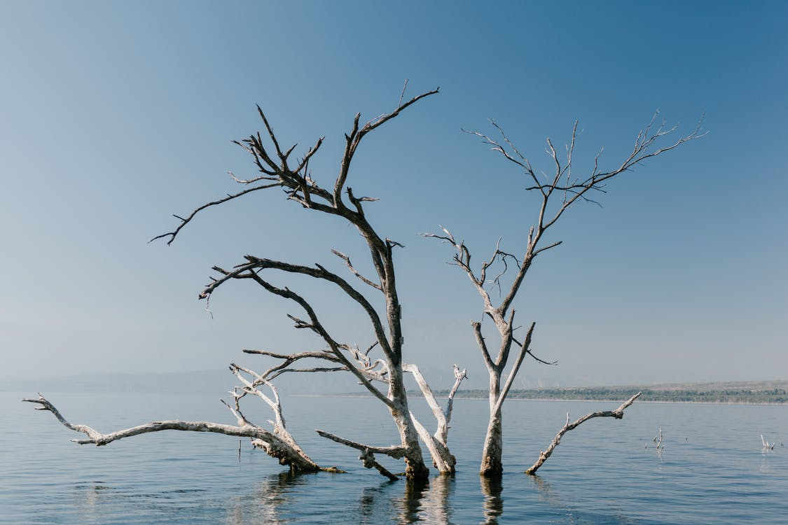 Long branches of plant in water of pond under blue clear sky in natural environment