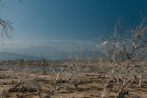 Dry plants on shore of calm reservoir