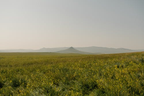 Green field against foggy mountains in summer