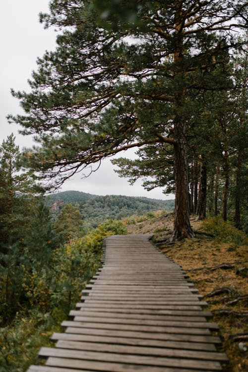 Scenic view of narrow wavy boardwalk between high green trees against mount in daytime