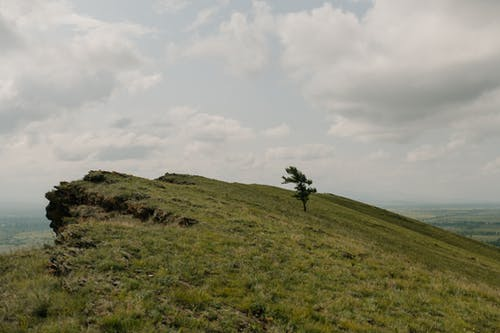 Lonely tree on green mount under cloudy sky