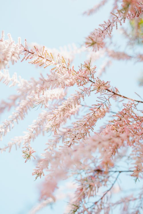 Gentle plant with fresh twigs in blossom in spring on background of bright blue sky in garden