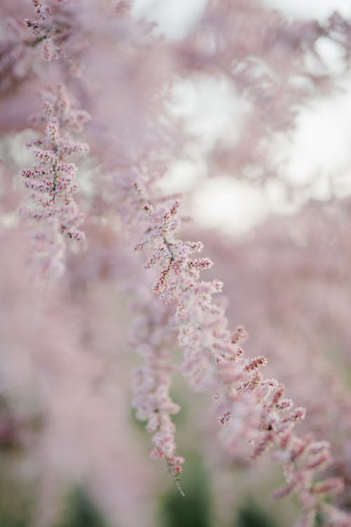 Delicate pink flowers in blossom growing on thin branch in spring in soft focus