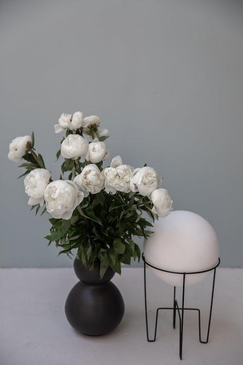 Buket Bunga Peony Yang Sedang Mekar Di Dekat Lampu Berbentuk Bola Dekoratif