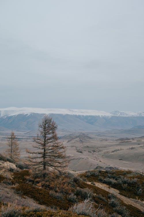 Árvores Solitárias Em Terreno Montanhoso