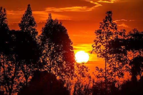剪影, 太陽, 日出 的 免費圖庫相片