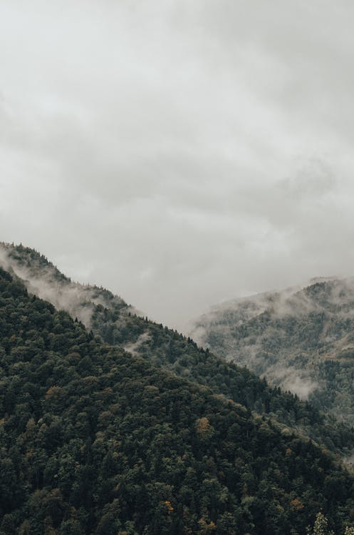 Imagine de stoc gratuită din acoperit de nori, anotimp, arbore