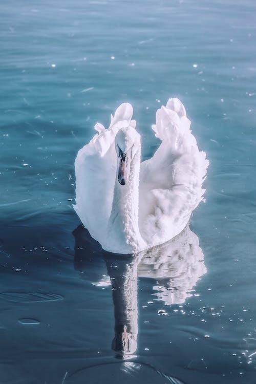 Бесплатное стоковое фото с HD-обои, вода, дикая природа