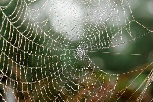 Thin cobweb with tiny water drips in garden