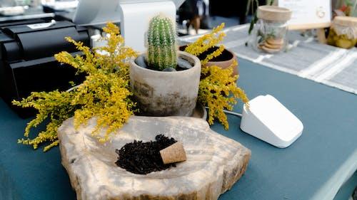 금전 등록기, 식물, 정물의 무료 스톡 사진