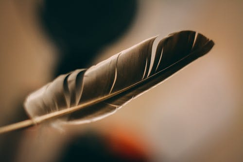 Close-Up Photo of a Gray Feather